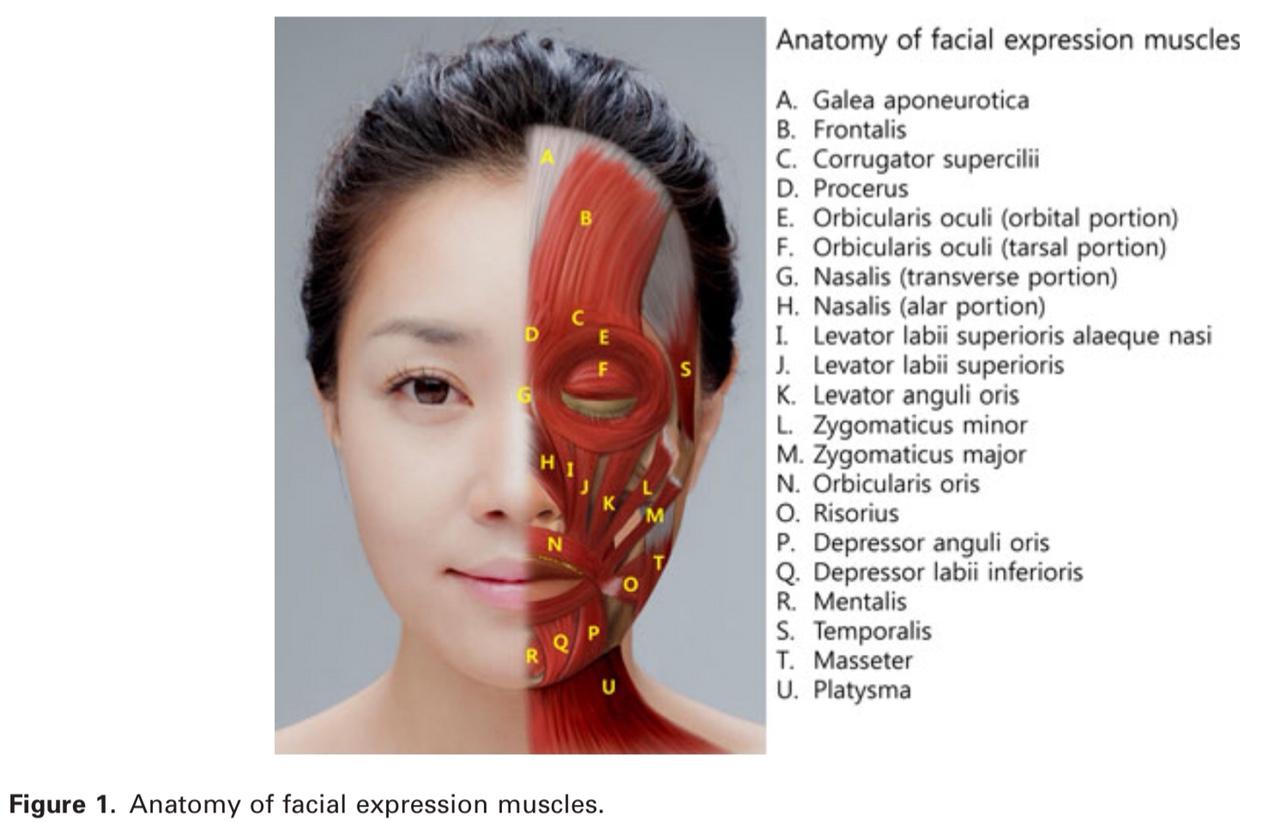 Các nhóm cơ ảnh hưởng đến nếp nhăn vùng mặt