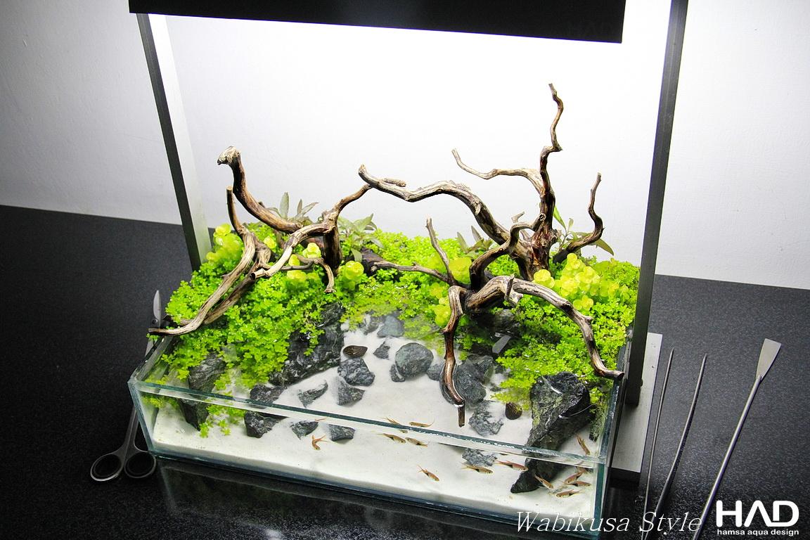 Tham khảo các mẫu hồ kính thủy sinh phổ biến