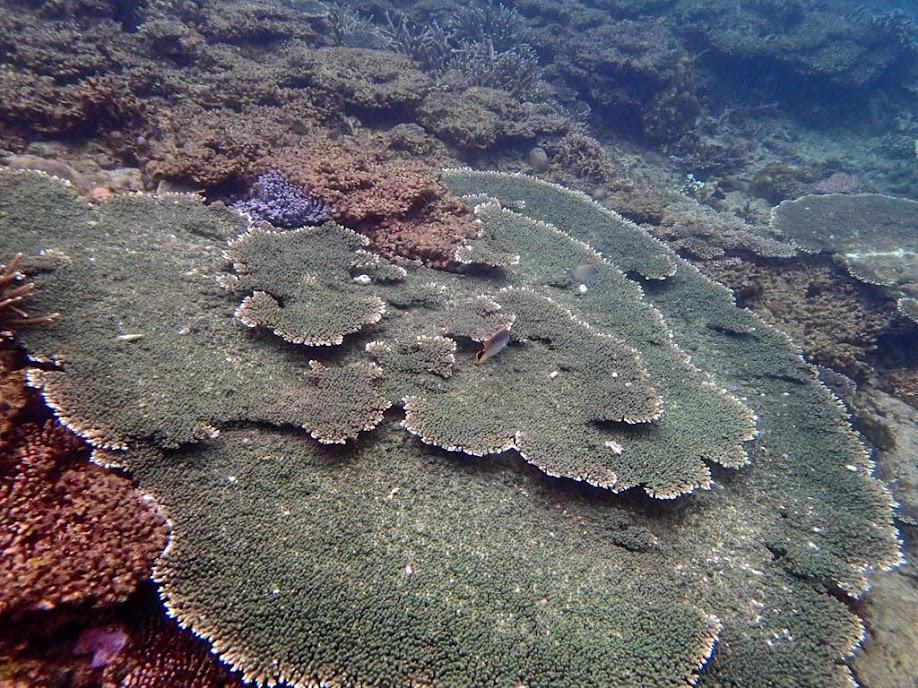 Coral reef, El Nido, Palawan, Philippines.
