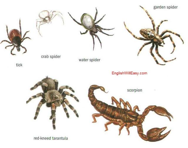 examples of arachnids