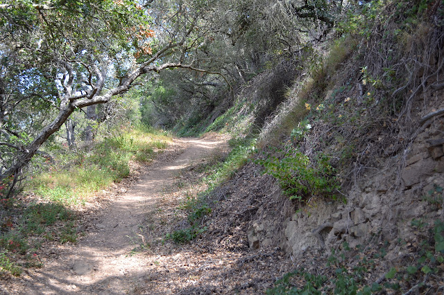 open dirt trail with trees overhead
