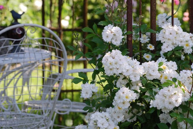 mon jardin mes merveilles guirlande d 39 amour. Black Bedroom Furniture Sets. Home Design Ideas