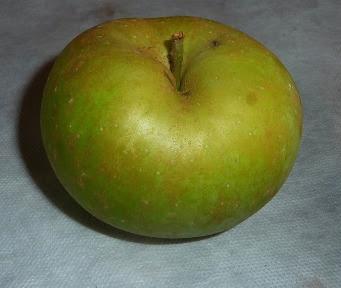jabłko boskoop