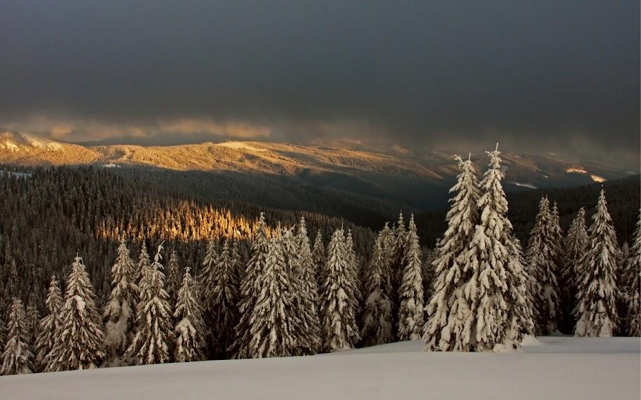 Munții Vrancei zăpadă brazi soare Covasna schi
