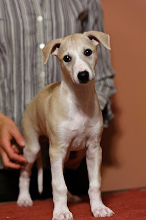 7 weeks old - Henry