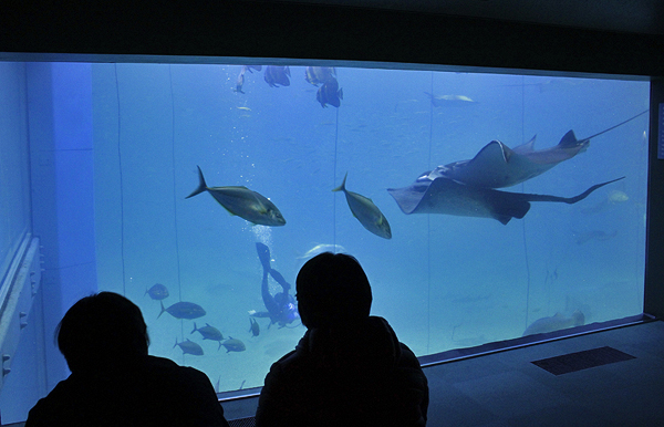 deep sea diving, Osaka Aquarium, top attractions in Japan, top attractions in Osaka