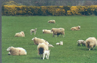 Resultat d'imatges de paisajes con animales de irlanda