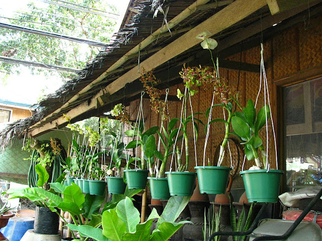 Из зимы в лето. Филиппины 2011 - Страница 7 IMG_0013%252520%2525287%252529