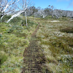 Metal grate in sections of the Porcupine Track (263492)