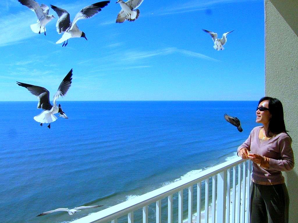U506 Bird Viewing