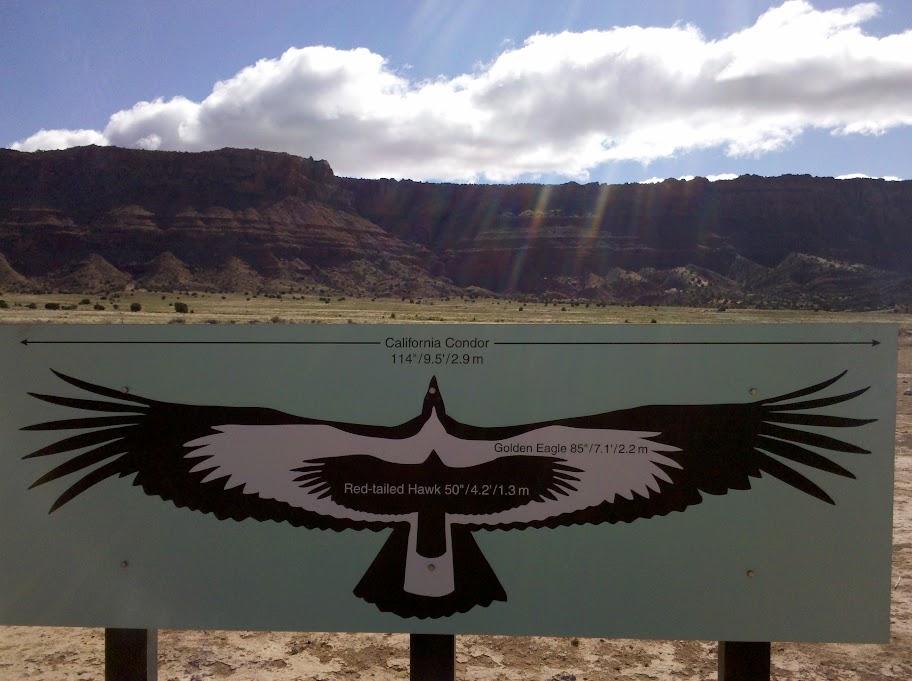 California Condor wingspan