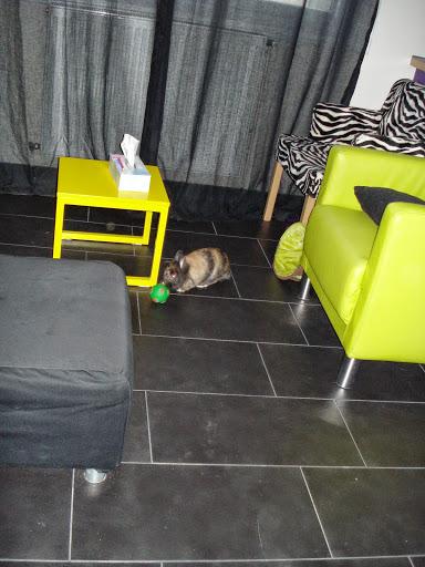 [adoptée]-Nala, lapine noire et marron, avec le bout du nez blanc Nala23
