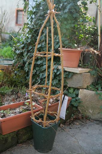 sostegni sostegno e supporti per piccole piante rampicanti