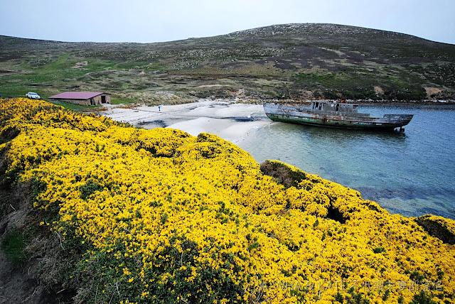 【福克蘭群島探索之旅】New Island新島登陸分享~三年三趟南極探索旅遊系列