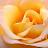 Steve Cosgrove avatar image