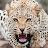omar babgi avatar image