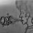 Marcus Crawford avatar image
