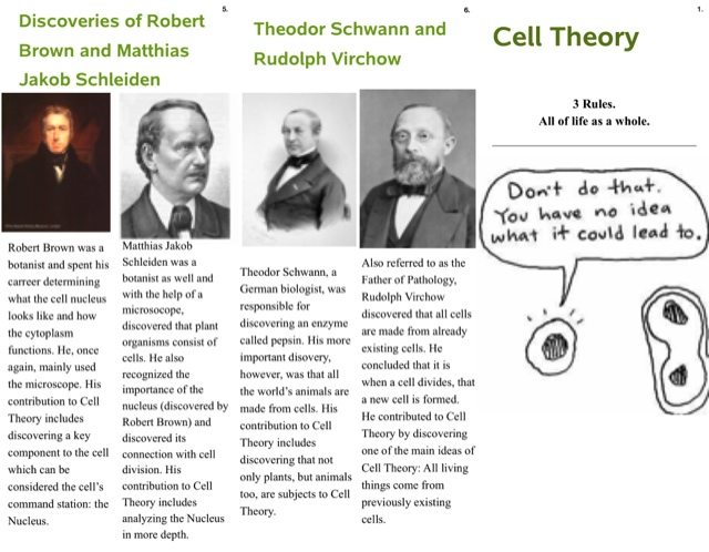 an analysis of the development of the cell theory by schleiden Description and analysis of the cell theory - prokaryotic cells in 1839 by schleiden and schwann and has to explore the development of cell.