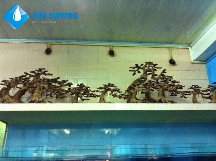 Lũa bonsai hồ cá thủy sinh 2