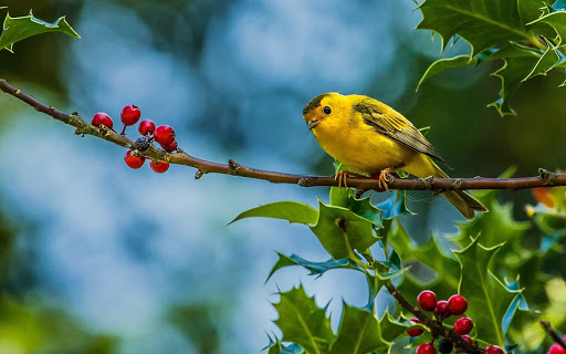 Yellow Bird in Branch of Tree