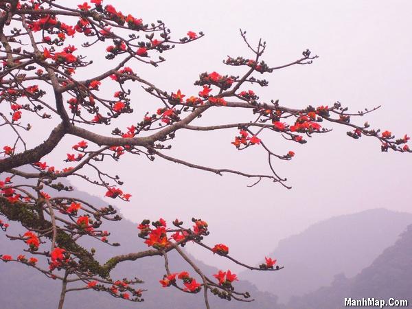 thơ tháng 3 hoa gạo