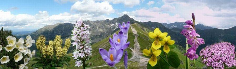 Flora Tatr i Sudetów. Roślinność górska. Rezerwaty przyrody Sudetów.