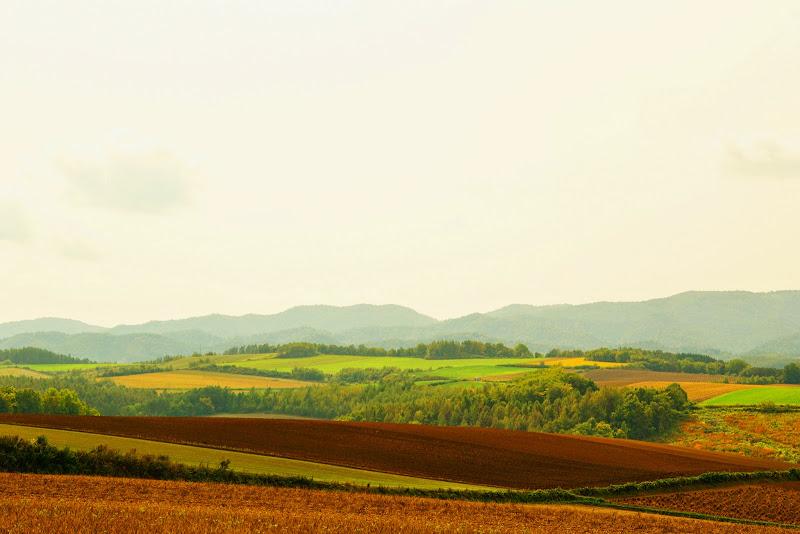 美瑛 ルベシベの丘 写真7