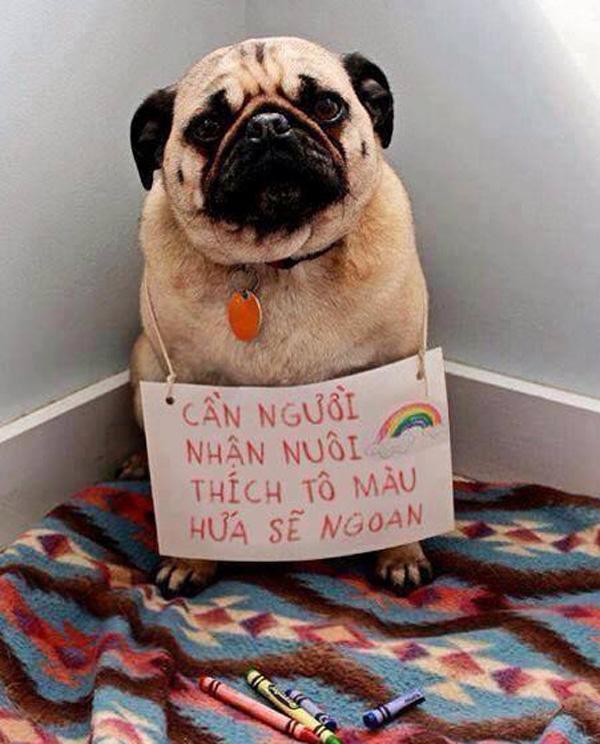 Ảnh hài hước chú chó cần tìm người nuôi