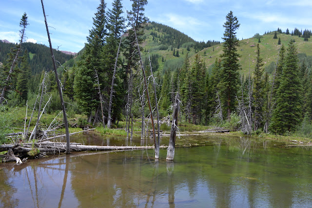 small pond along the creek with long dead trees standing in it