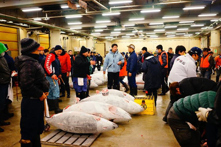 subasta de atun tsukiji tokyo