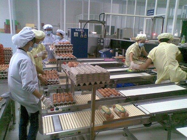 Đơn hàng nông nghiệp nhặt trứng gà cần 12 nữ thực tập sinh làm việc tại Aomori Nhật Bản tháng 04/2017