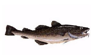 Aglio olio e peperoncino italian fish seafood names for Fish whose eggs are used for caviar