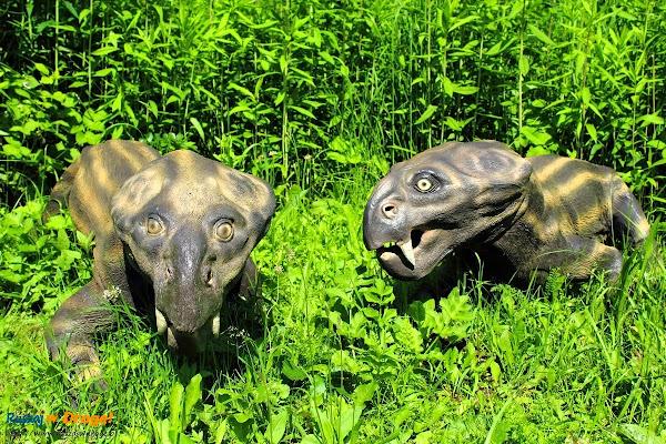 bałtów jura park  - dicynodon