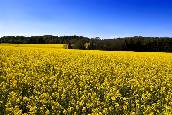 Beautiful Nature Pictures: Yellow Flowers Galore