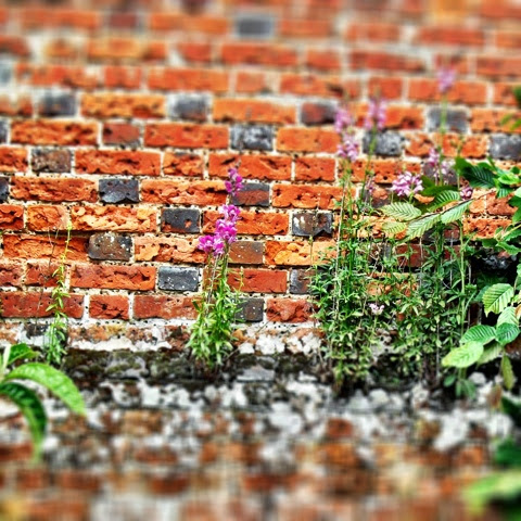 Photo-journal: The walled garden at Marks Hall Arboretum