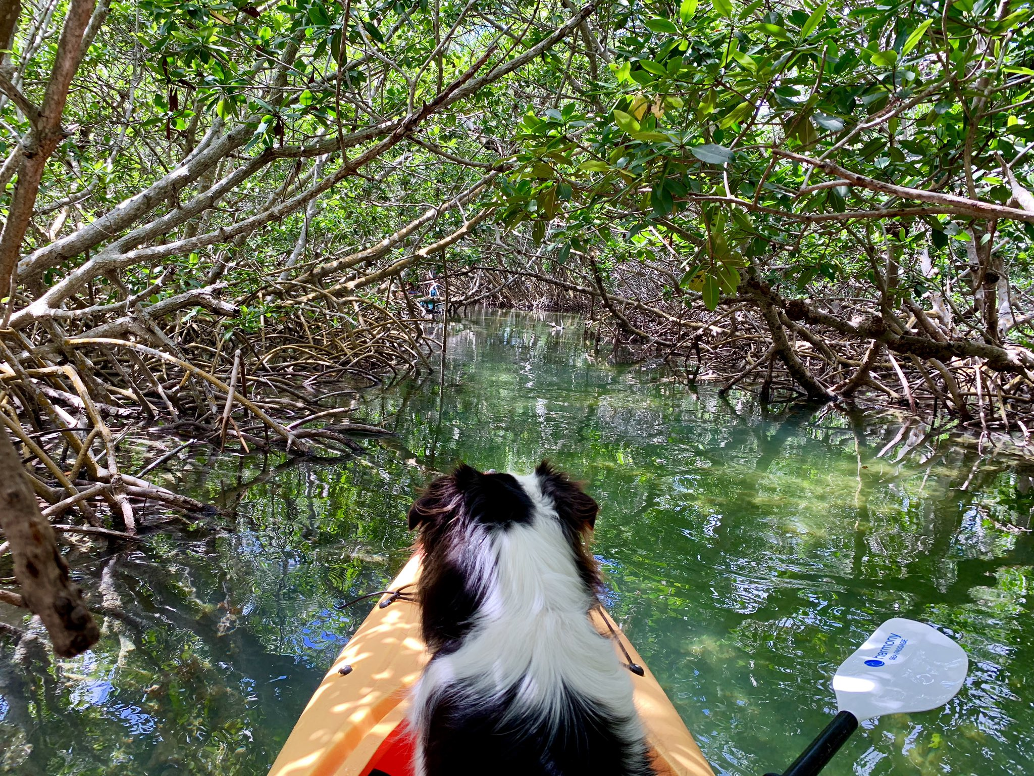 dog friendly places in florida lazy dog adventures