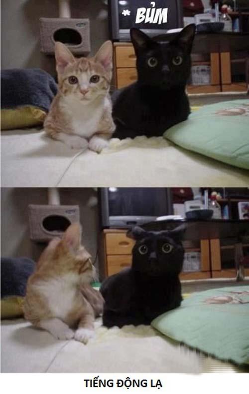Ảnh chế Mèo
