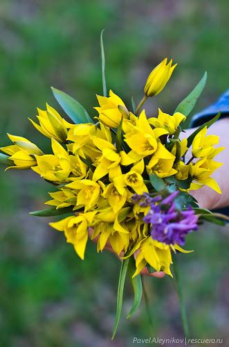 Букет лесных цветов