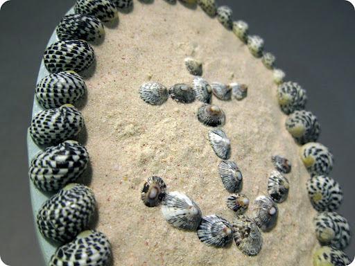 Shell anchor in fine sand with gradated black and white speckled snail shells around edge.