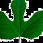 Vanna Herb