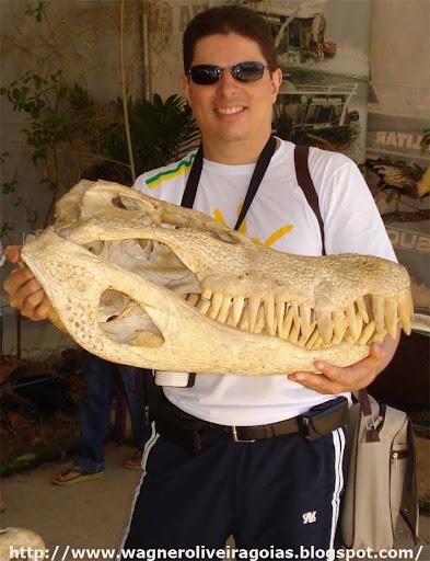 Questões e Fatos sobre Crocodilianos gigantes: Transferência de debate da comunidade Conflitos Selvagens.  - Página 3 95wagner%25201%2520cabe%25C3%25A7a