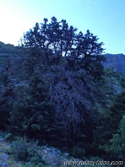 Barranco del Cambullon de Velez