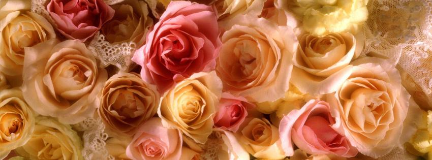 Ảnh bìa đóa hoa hồng đẹp