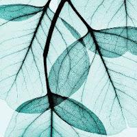 Henna S's avatar