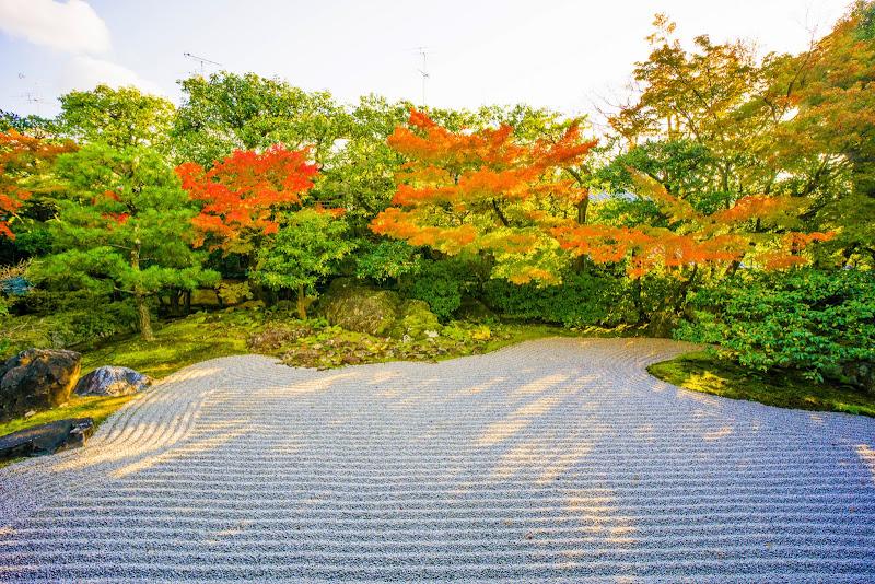 京都 圓徳院 紅葉 写真2