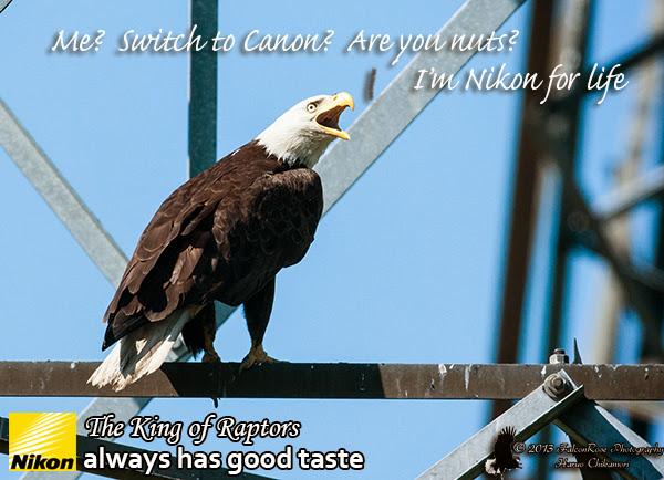 07-25-2013_Nikon_Eagle.jpg