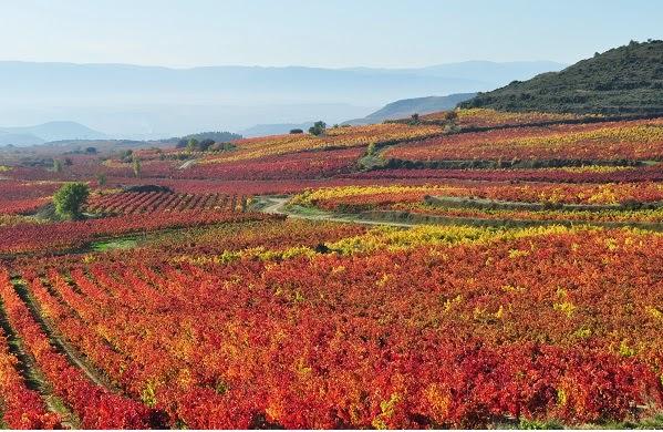 La Ruta del Vino de la Rioja Alavesa