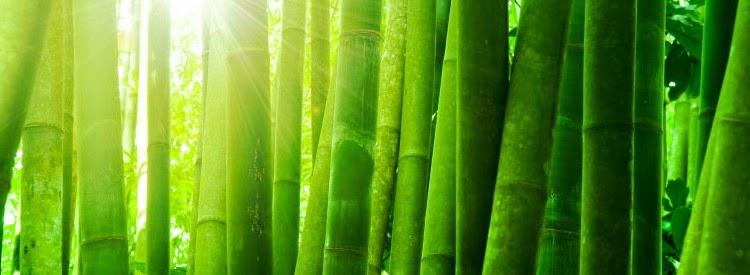 kaos bahan katun bamboo malang