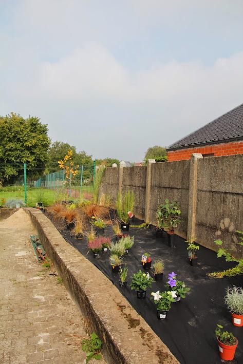 Nouvelle maison dit aussi nouveau jardin... IMG_9514