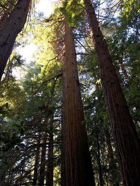 Memorial Redwoods